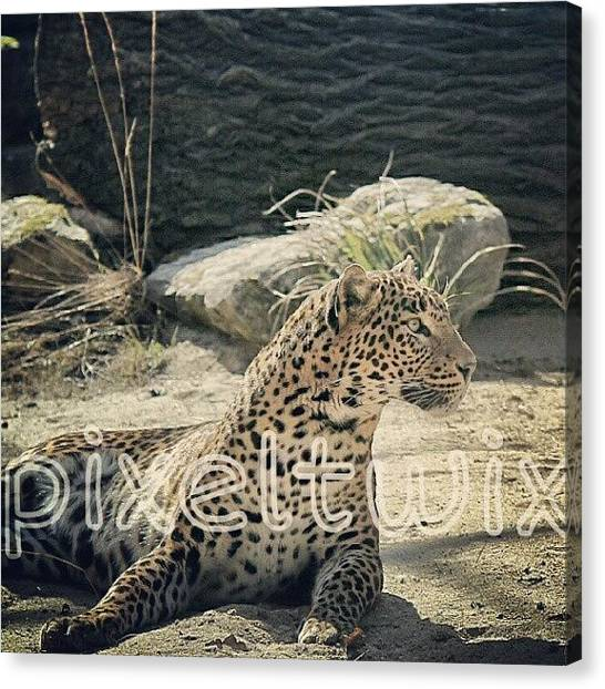 Panthers Canvas Print - This Is My Favorite Photograph by Ervina Bakker