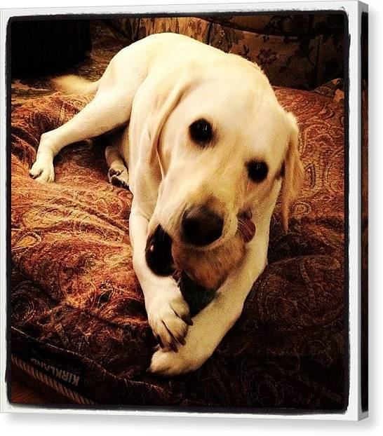 Labrador Retrievers Canvas Print - This Is My Little Sister. Her Name Is by Caitlin Schmitt
