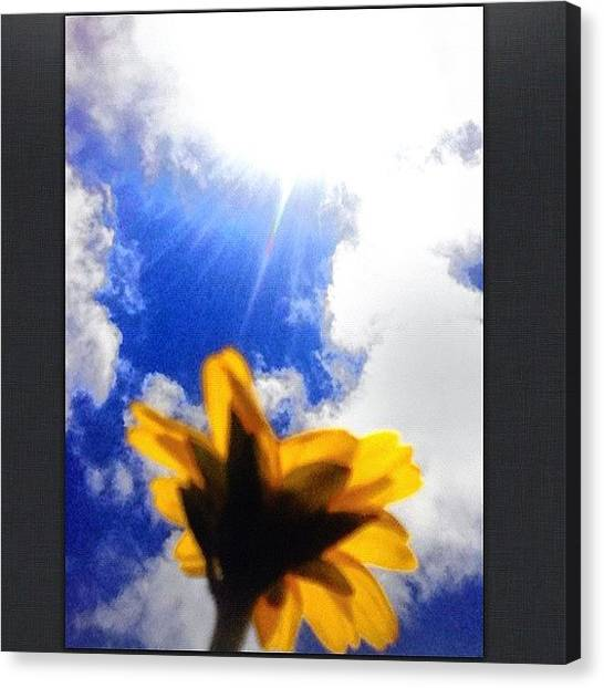 Sunflowers Canvas Print - This Is One Of Those Mini Sunflowers U by Yzza Sebastian