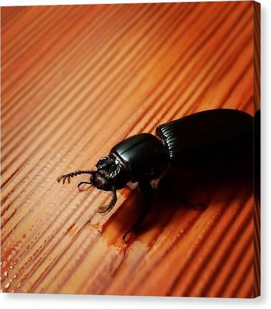 Beetles Canvas Print - This Little Buddy Didn't Let Me Sleep by Freddy Moncada