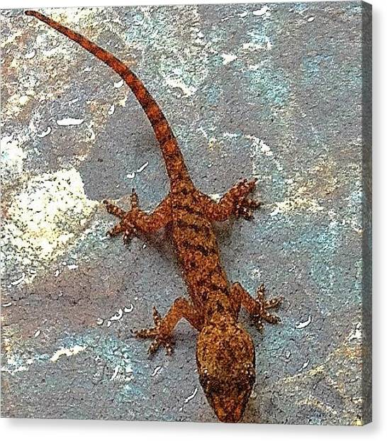 Lizards Canvas Print - This Little Guy Is Smaller Than My by Debi Tenney