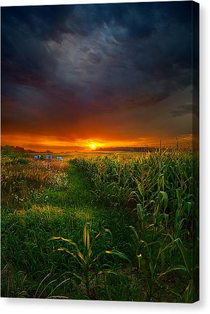Sunset Horizon Canvas Print - This Morning by Phil Koch