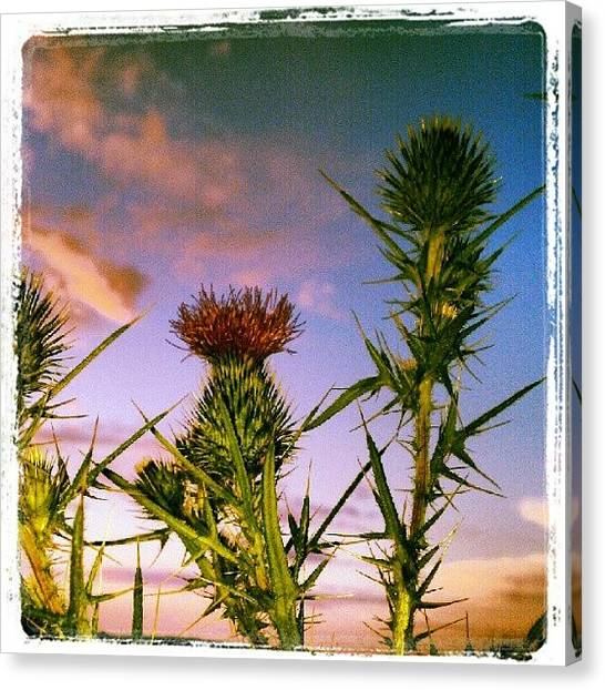 Maine Canvas Print - Thistle ~ #072412 #backcove #signals by Chris T Darling