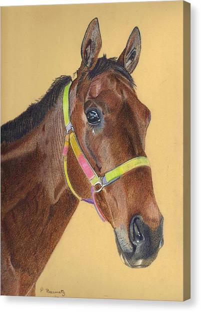 Thoroughbred Canvas Print