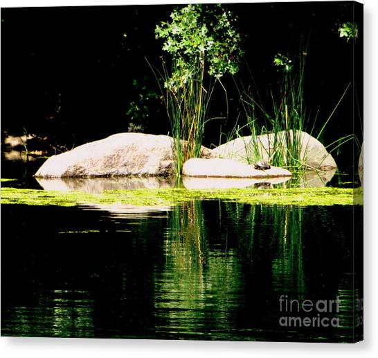 Three Rocks And A Turtle Canvas Print by Maria Scarfone