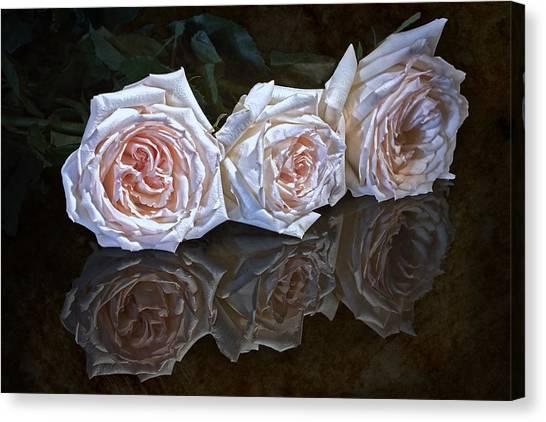 Lush Canvas Print - Three Roses Still Life by Tom Mc Nemar