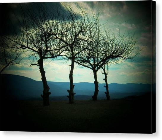 Three Trees Canvas Print by Joyce Kimble Smith