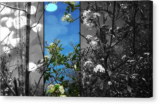 Through The Flowers Canvas Print by Lee Yang