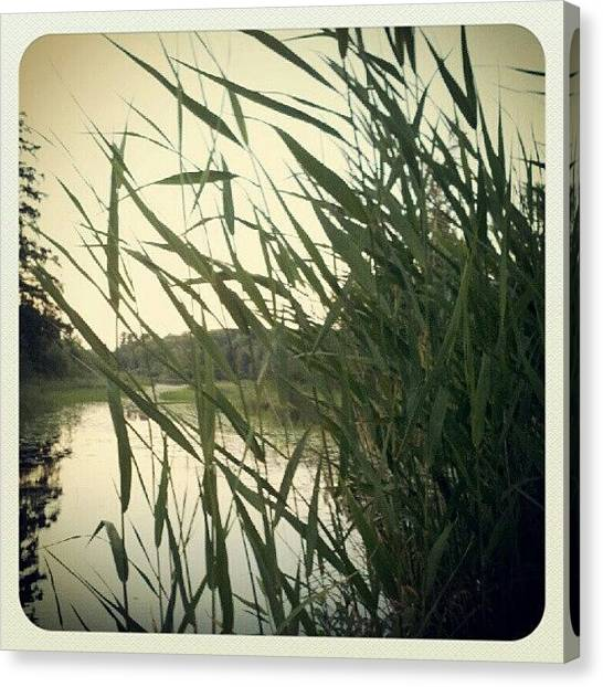 Minnesota Canvas Print - Through The Grass by Amber Abreu