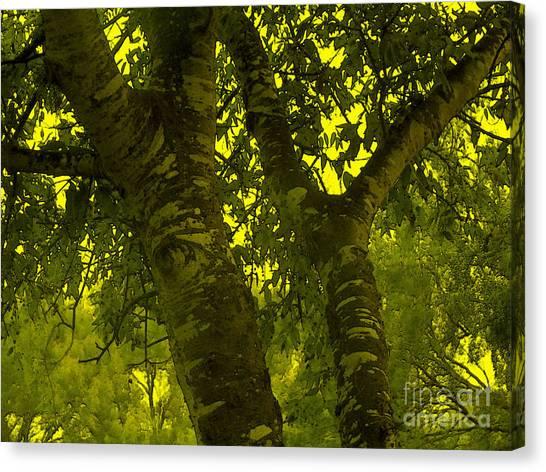 Through The Green Man's Eyes Canvas Print