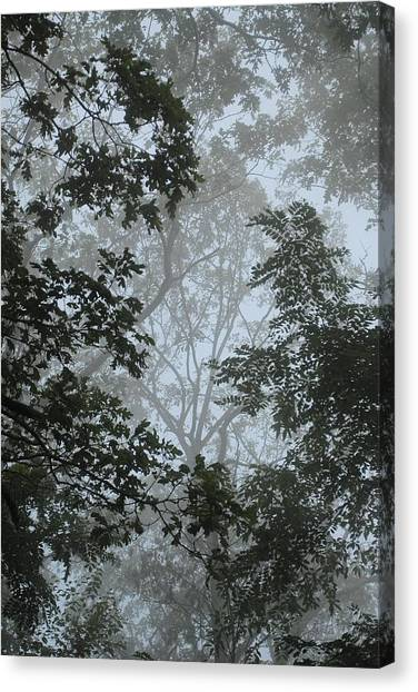 Through The Trees Canvas Print by