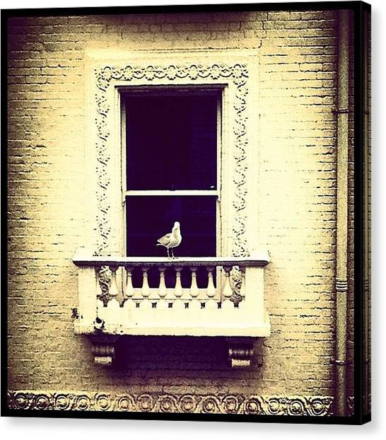 Seagulls Canvas Print - #throughthelookingglass #framed by Manee Authi 🇬🇧