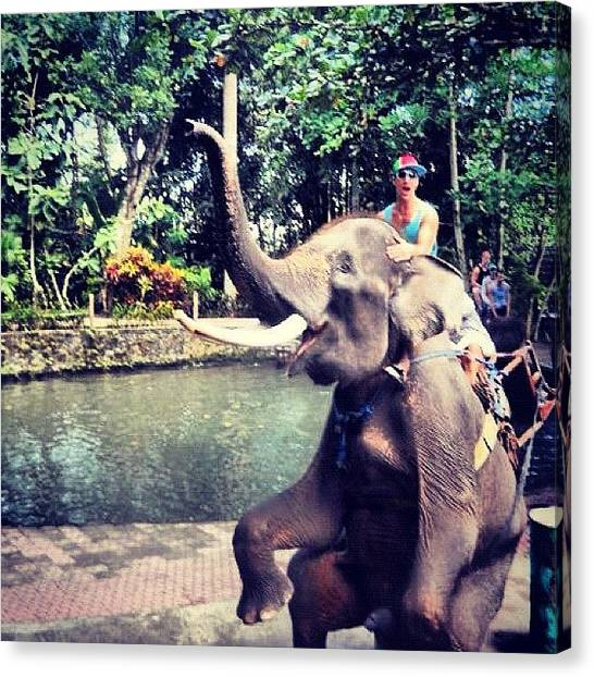 Jungles Canvas Print - #throwback #bali #travel #elephant by The Fun Enthusiast