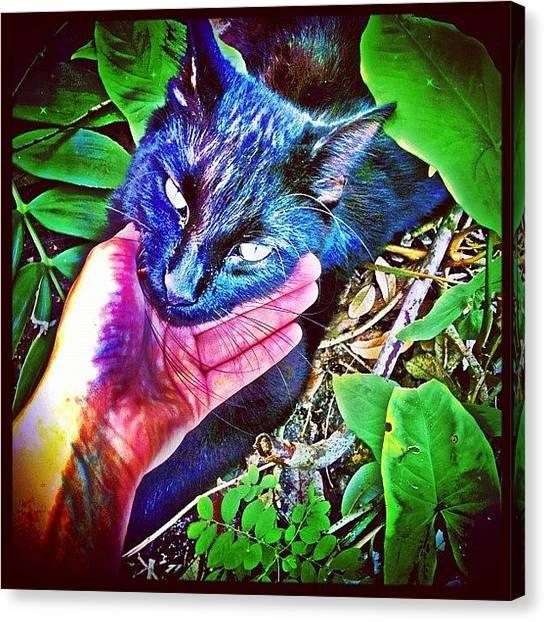 Panthers Canvas Print - Thunda Puff 🐯 #kitty #kittycat by Anna Dmitrievna