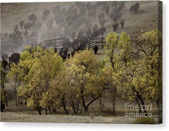 Thunder In The Black Hills Canvas Print