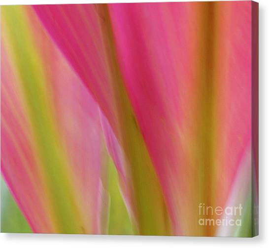 Ti Leaves Canvas Print