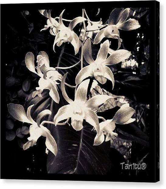 Orchids Canvas Print - #ti_challenge_34 @true_instinct by Tania Torres