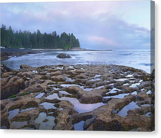 Juan De Fuca Provincial Park Canvas Print - Tide Pools Exposed At Low Tide by Tim Fitzharris