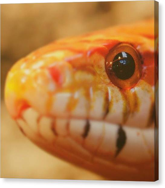 Reptiles Canvas Print - #tier #tiere #animals #schlange #snake by Jens Buessow