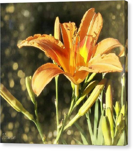 Tigers Canvas Print - Tiger Lily Dream. #lily #lilybuds by Jess Gowan