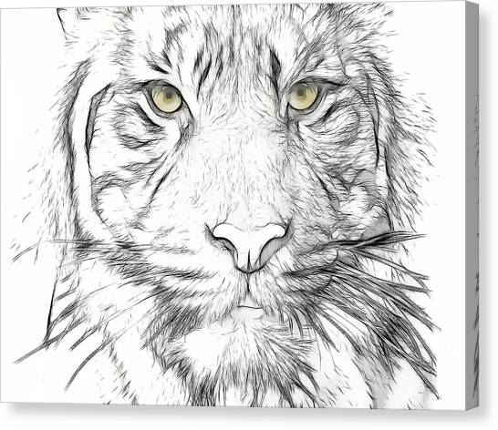 Tiger Canvas Print by Tilly Williams