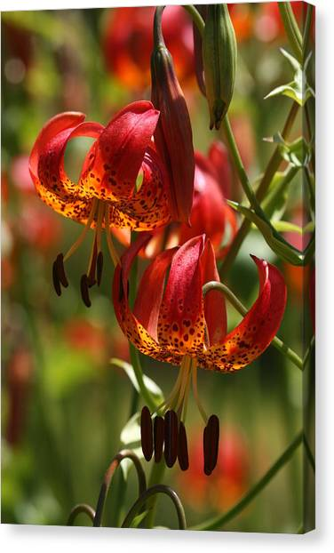 Canvas Print - Tigers And Lillies. by Larry Robinson