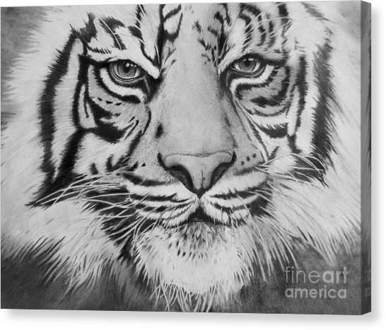 Tiger's Eyes Canvas Print
