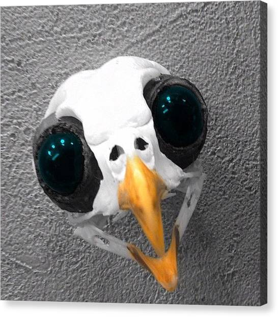 Finches Canvas Print - Tiny #bird Skull With Big Eyes by Pete Michaud