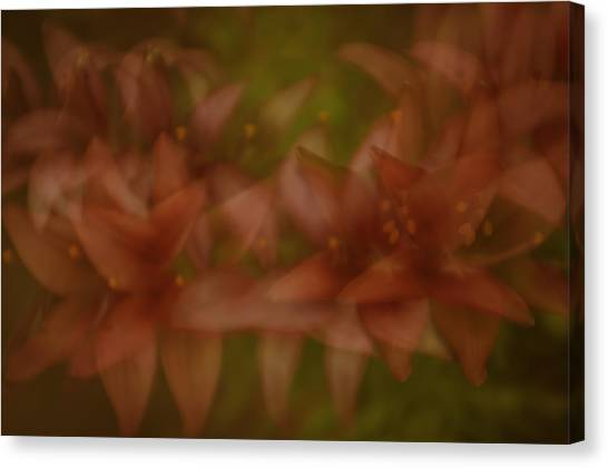 Canvas Print featuring the photograph Tiny Ghost Lily by Sherri Meyer