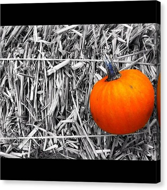 Pumpkins Canvas Print - Tiny Pumpkin #keekthegeek #pumpkin #hay by Ke-Ke Sayers
