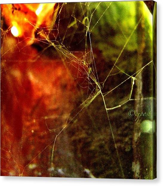 Spider Web Canvas Print - Tiny Spiderweb Wasn't Much More Than by Cynthia Post