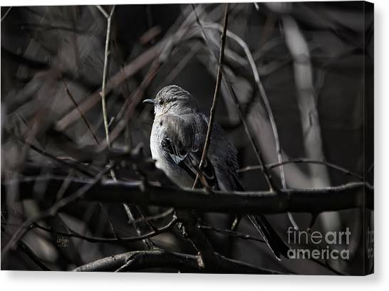 Mockingbird Canvas Print - To Kill A Mockingbird by Lois Bryan