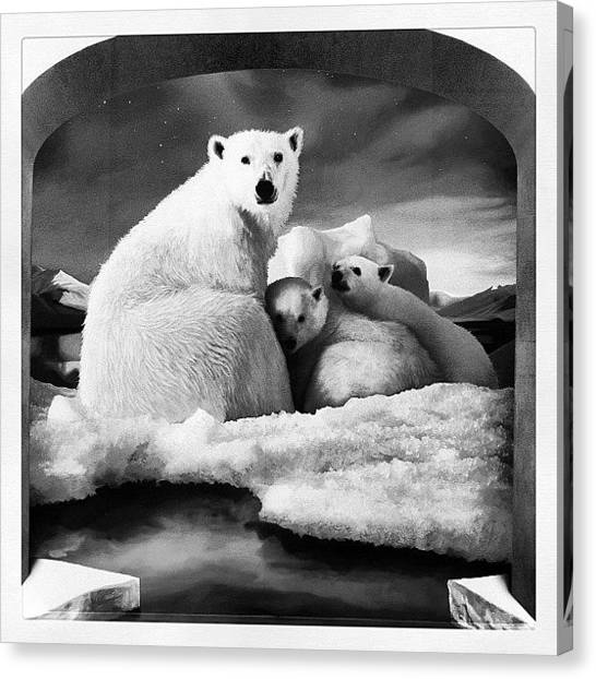 Science Canvas Print - To The Artic #sgig #iphone #instagood by Eva C