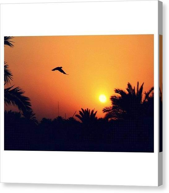 Dove Canvas Print - [today's Sunset] Iraq - Baghdad Near by Nawar Al-ani