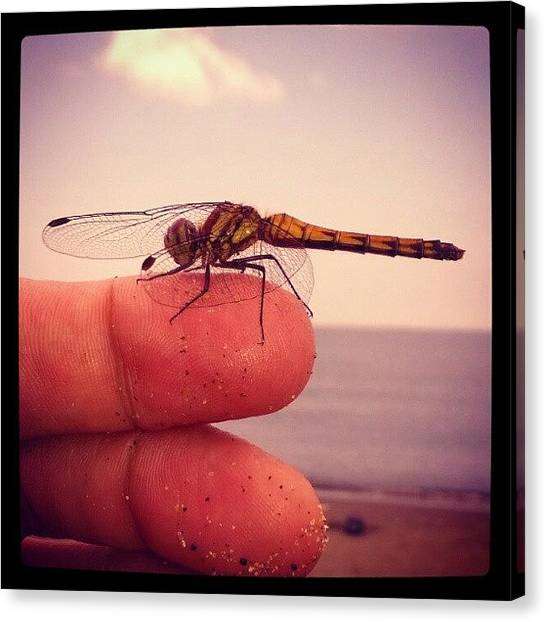 Fingers Canvas Print - Tombo Dragonfly On Finger by Patric Spohn