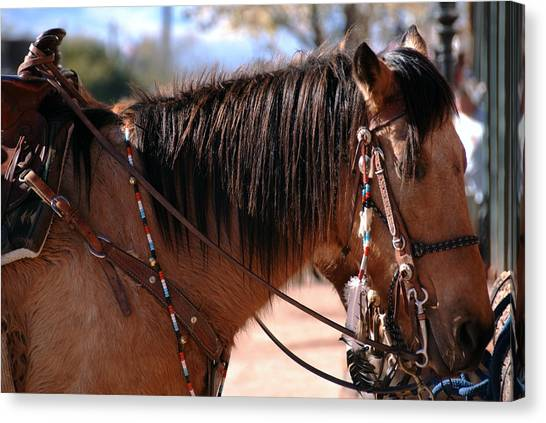 Tombstone Horse Canvas Print by Anthony Citro