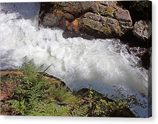 Tongass National Forest Canvas Print - Tongass National Forest by Kristin Elmquist