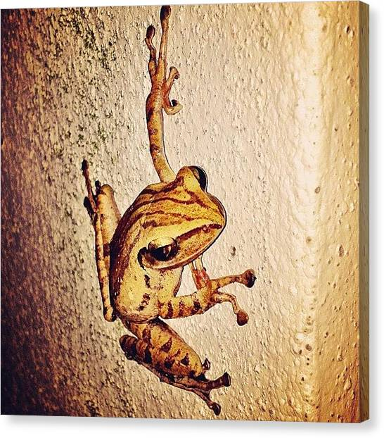 Frogs Canvas Print - Tonight's Visitor by Beatrice Looi