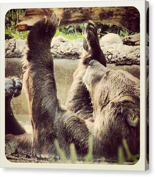 Bears Canvas Print - #toronto #metro #zoo #samson #age #12 by Christinaashley Huynh