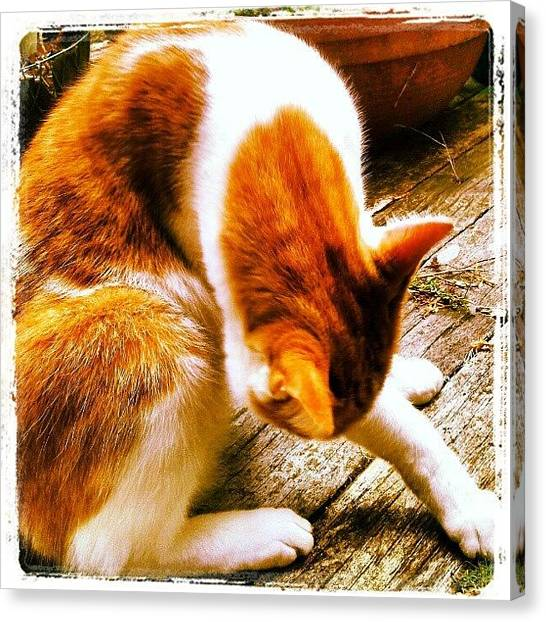 Pumpkins Canvas Print - #torquay #devon #mycat #pumpkin #orange by Rachel Lavender