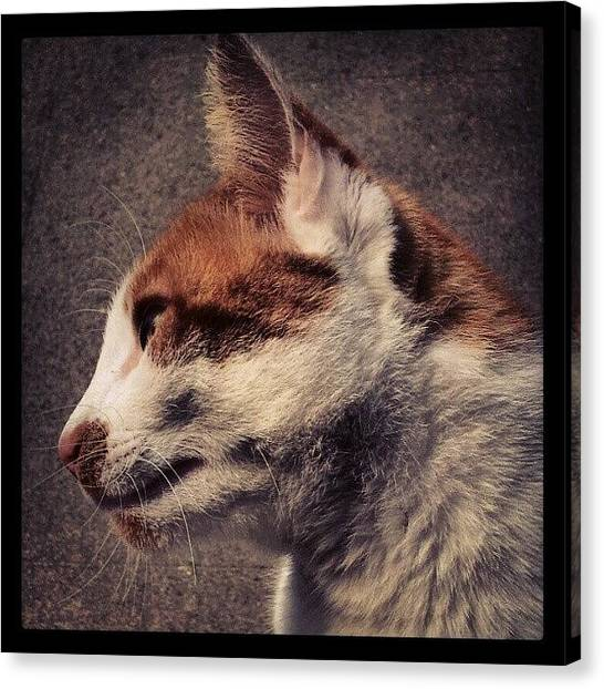 Pumpkins Canvas Print - #torquay #mycat #pumpkin #orange by Rachel Lavender
