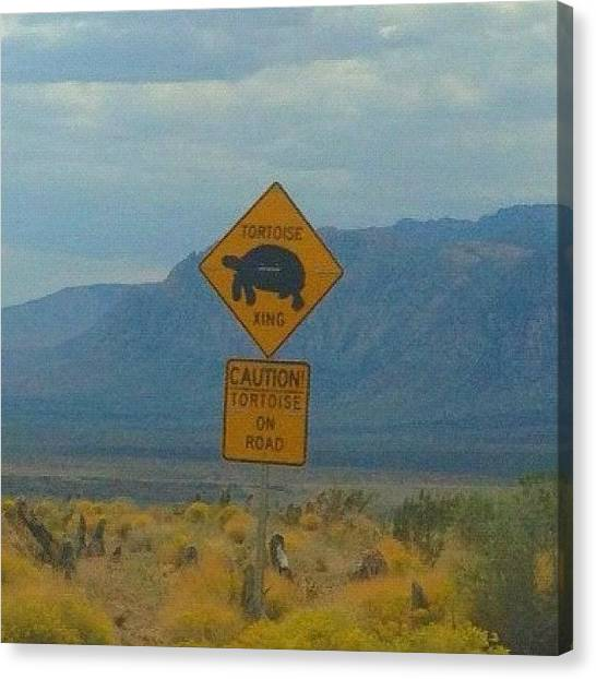 Tortoises Canvas Print - #tortoise Crossing #redrockcanyon by Sherri Rogers
