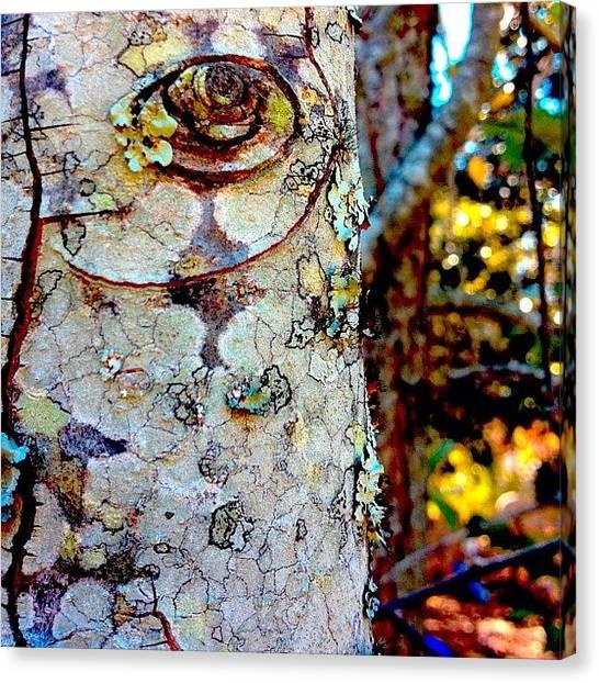 Spiral Canvas Print - Totem #totem #tree #bark #limb #stump by Sara Jones
