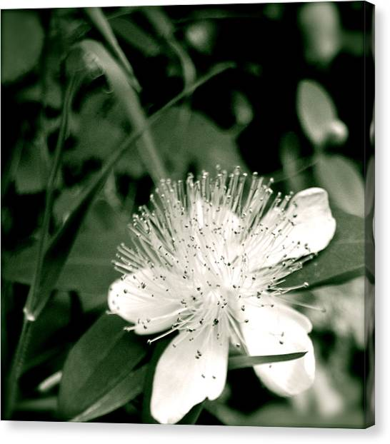 Canvas Print featuring the photograph Touch by HweeYen Ong