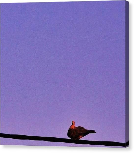 Dove Canvas Print - #tourterelle #turtledove #dove #bird by Val Lao