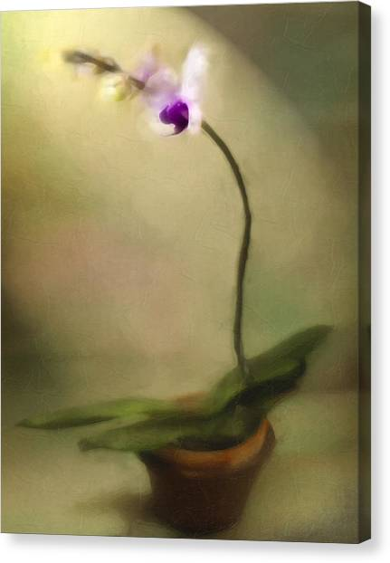 Toward The Light Canvas Print by Jill Balsam