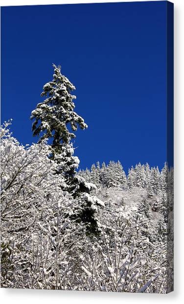 Towering Tree On Snow Covered Mountain Canvas Print