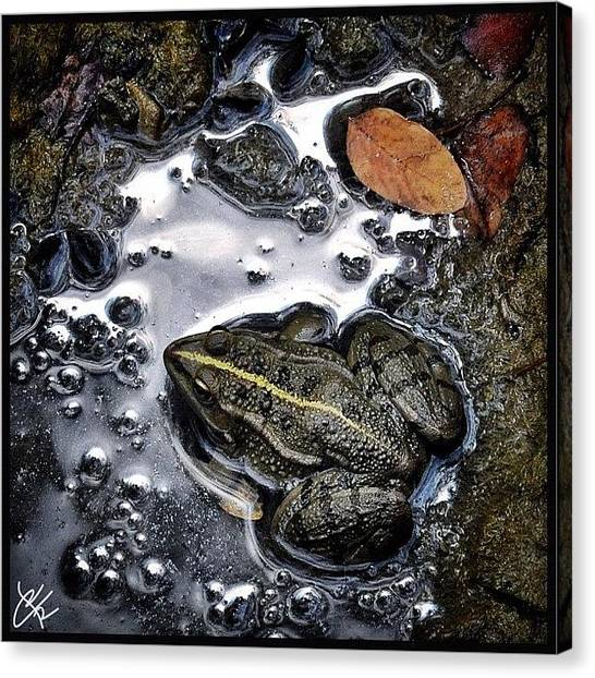 Frogs Canvas Print - Tra Ombra E Luce #all_shots #animal by Riccardo Rossi