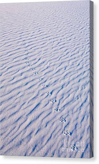 Sandy Desert Canvas Print - Tracks At White Sands by Matt Tilghman