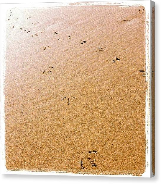 Kangaroo Canvas Print - Tracks In The Sand  by Andrew Coulson